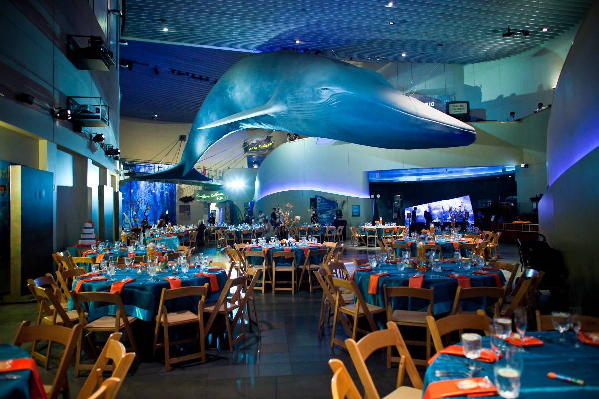 Aquarium Of The Pacific Wedding Venues Pinterest Weddings And